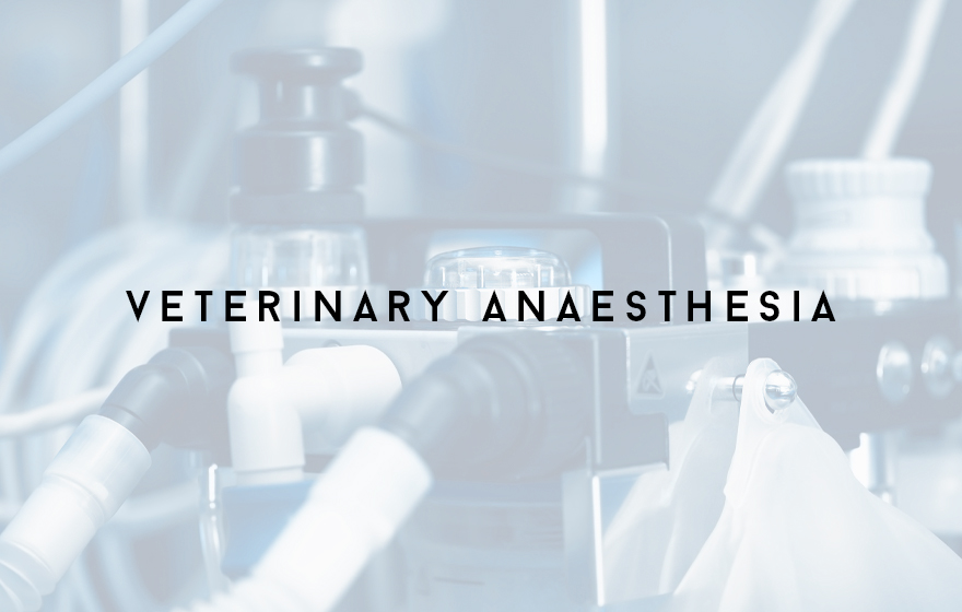 Course Image Unit 312/VN12 Principles of supporting veterinary anaesthesia