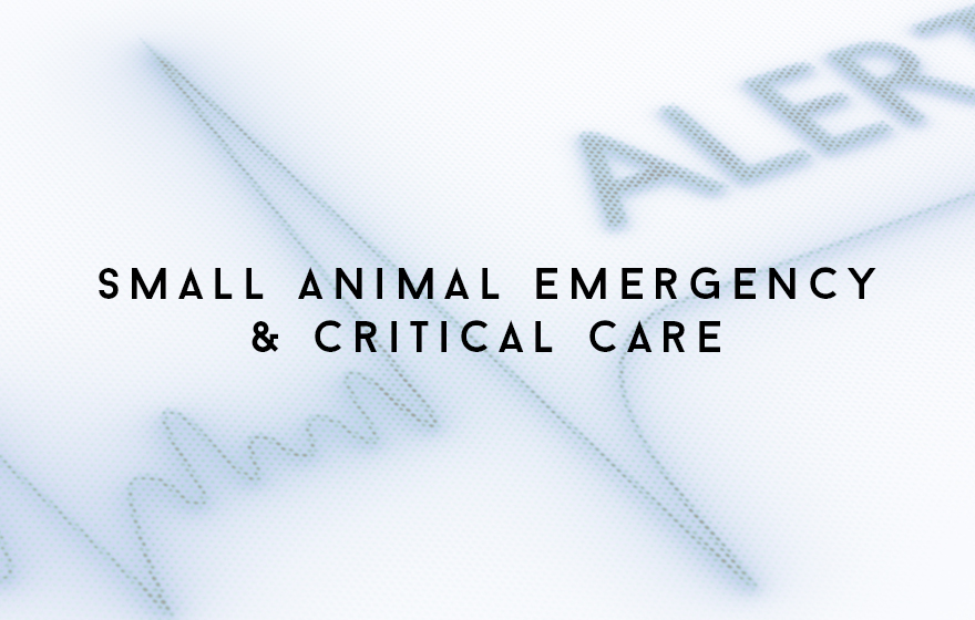 Course Image Unit 316/SAVN18 Principles of small animal veterinary nursing emergency and critical care