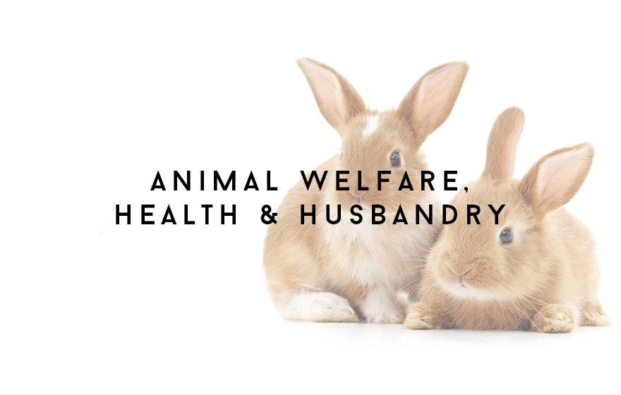 Course Image Unit 304/VN4 Applied animal welfare, health and husbandry for veterinary nurses