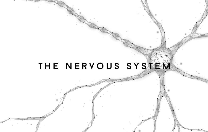 Course Image The Nervous system